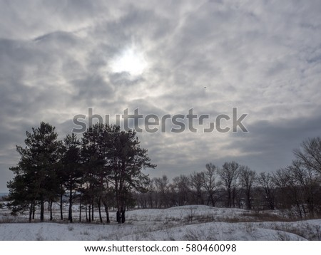winter forest in cloudy weather #580460098