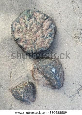 Stone on the beach #580488589