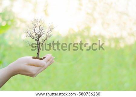 Ecology concept Human hands holding big plant with on blurred sunset background,World Environment Day #580736230