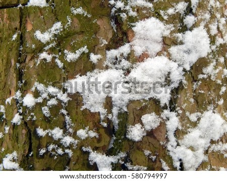 The textured surface of the bark of a tree with snow close-up #580794997