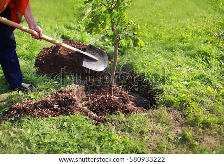 Man plants a tree, hands with shovel digs the ground, nature, environment and ecology concept #580933222