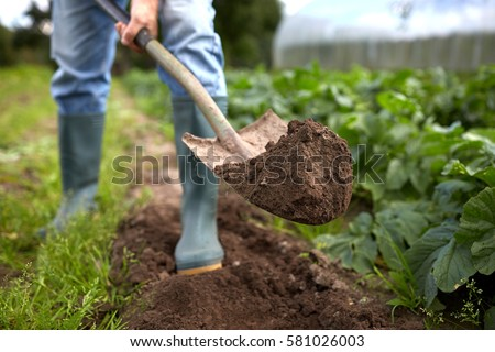 farming, gardening, agriculture and people concept - man with shovel digging garden bed or farm Royalty-Free Stock Photo #581026003