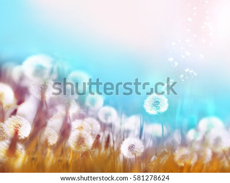 Spring summer floral border template. Air glowing dandelions flying in wind with soft focus sun morning outdoors macro on light blue background. Romantic dreamy artistic image. #581278624