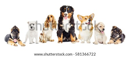 dogs set on a white background #581366722