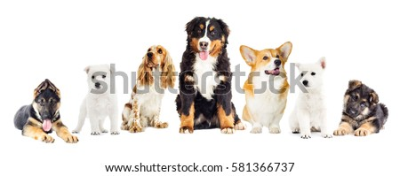 dogs set on a white background #581366737