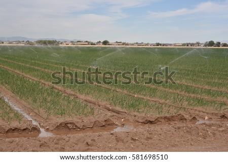 crop sprinklers #581698510