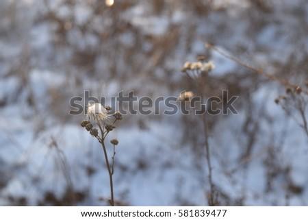 winter flowers #581839477