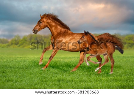 Red mare with colt run on green grass against beautiful sky #581903668