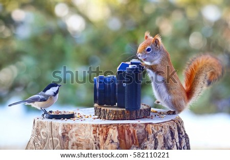 Photographer squirrel and model chickadee. #582110221