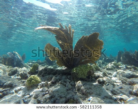 Sea Fan in Key Largo #582111358
