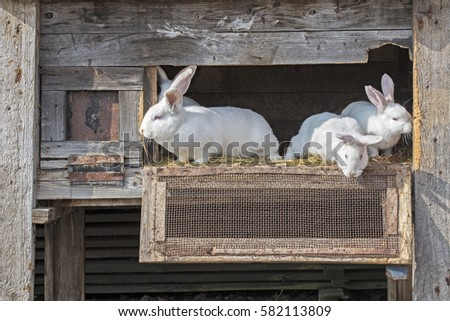 White rabbits looking outside through the cage #582113809