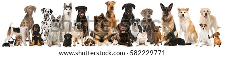 Many breed dogs isolated #582229771
