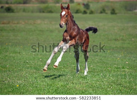 A little colt gallops along on a spring meadow  #582233851