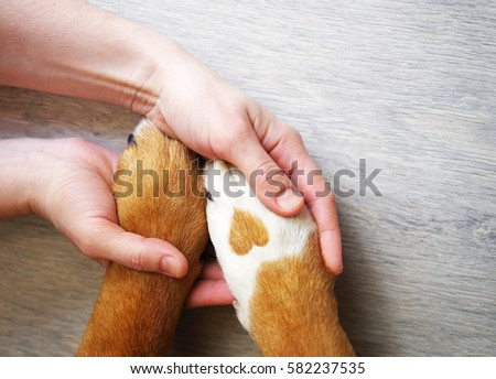 Dog paws with a spot in the form of heart and human hand close up, top view. Conceptual image of friendship, trust, love, the help between the person and a dog Royalty-Free Stock Photo #582237535
