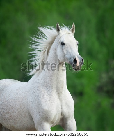 white beautiful horse portrait on green background #582260863