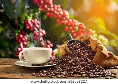 Cup of coffee with smoke and coffee beans in burlap sack on coffee tree background #582329227