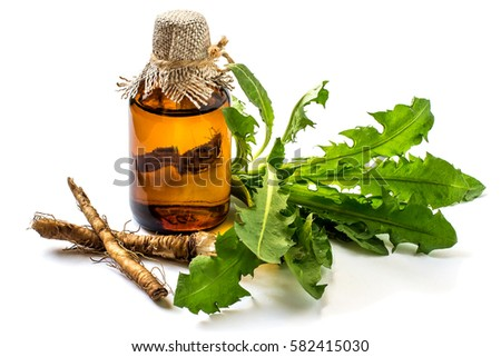 Medicinal plant dandelion (Taraxacum officinale). Dandelion leaves, roots and pharmaceutical bottle on a white background. It is used for herbal medicine and healthy food  #582415030