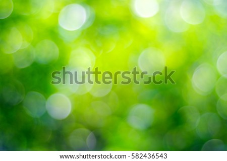 Blur green tree leaves with bokeh background, abstract greenery spring nature background #582436543