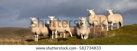 Group of Sheep #582734833