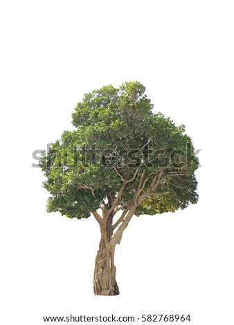 Green tree for gardening and park #582768964