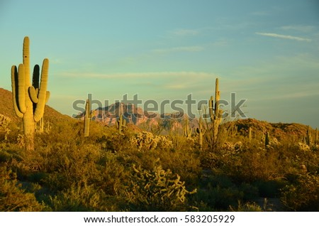 Arizona Desert featuring Saguaros,  and rugged mountains #583205929