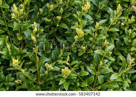green spring background #583407142