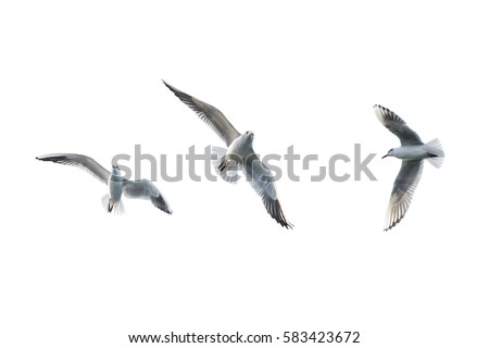 Flying seagulls Royalty-Free Stock Photo #583423672