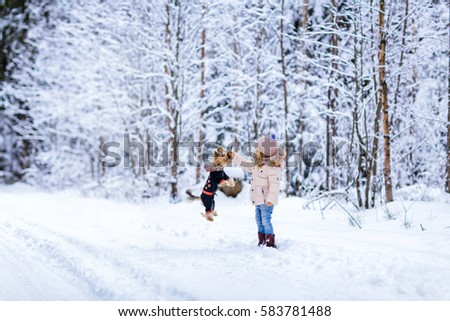 Stylish little girl standing on the road in the forest in the winter and to train a dog Yorkshire terrier. The girl picked up a stick up, the dog jumped and hung in the air #583781488