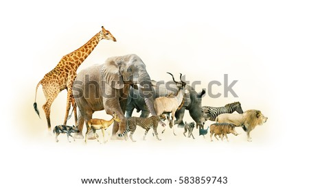 Common African Safari animals walking together with dusty background Royalty-Free Stock Photo #583859743