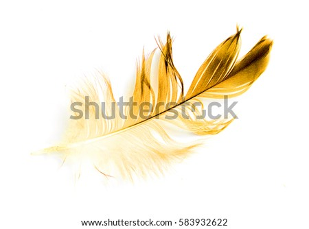 bird feather on white background #583932622