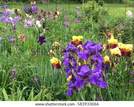 Flower Garden #583933066