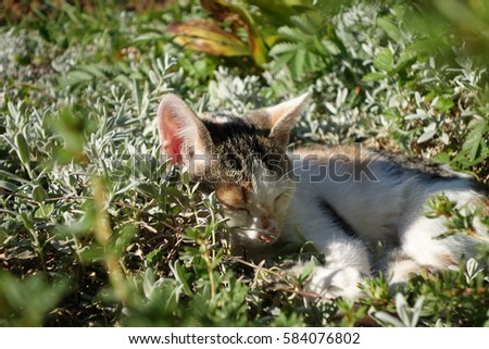 Kitten sleeping on grass #584076802