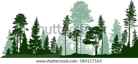 illustration with high pines in fir trees forest isolated on white background Royalty-Free Stock Photo #584117563