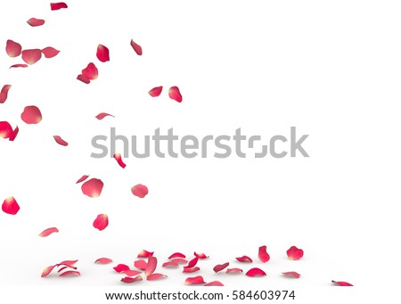 Rose petals fall to the floor. Isolated background #584603974