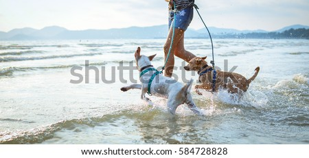 thai dogs enjoy playing on beach with owner #584728828