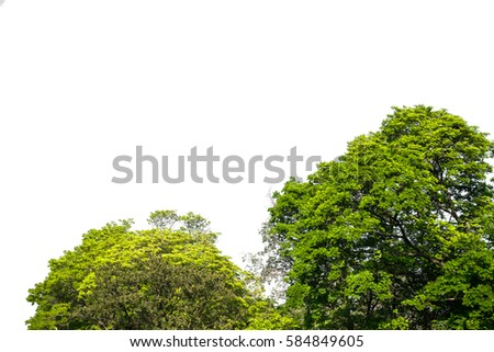 Green tree with white background #584849605