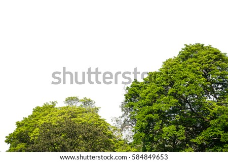 Green tree with white background #584849653