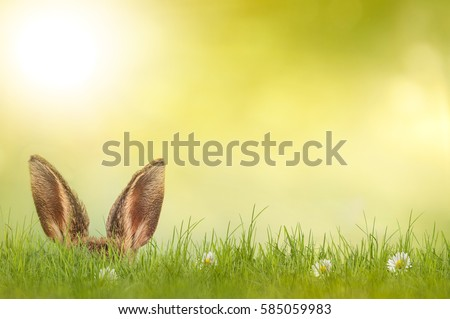 Easter bunny hiding in meadow
