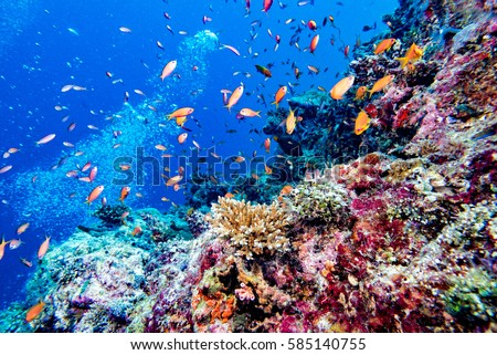 Maldives corals house for Fishes underwater landscape #585140755