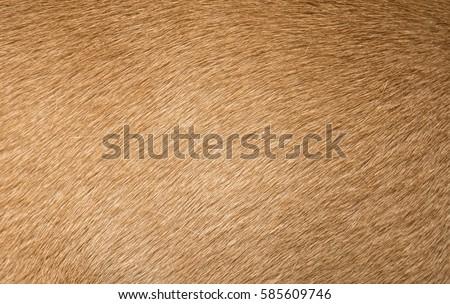 Brown dog fur texture or background. Macro shot. Royalty-Free Stock Photo #585609746