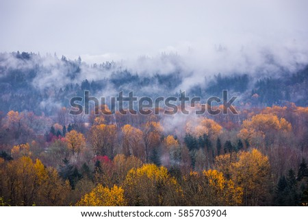 Autumn forest in the mist, beautiful trees on a background of mountains  #585703904