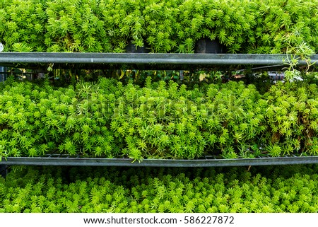 Group of Moist and small tree in a clay pot Australian carpet for Landscaping tray with moist and small pants tiny cactus Place on grill rack steel in a tree market background usage #586227872
