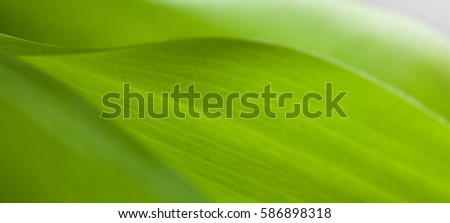 green leaf close-up, close-up shot of beautiful curves plants #586898318