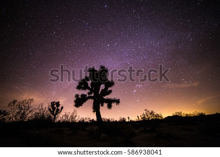 Joshua Tree National Park star photo
