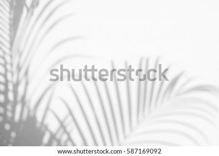 abstract background of shadows palm leaves on a white wall. White and Black #587169092