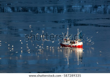 Fishing boat and seagulls in the north waters. Photo made in february on the Lofoten islands #587289335