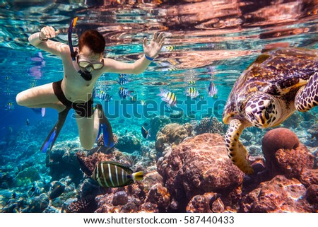 Snorkeler diving along the brain coral. Maldives Indian Ocean coral reef. #587440433