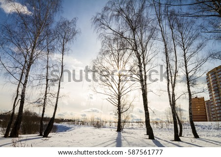 Sunny winter forest #587561777