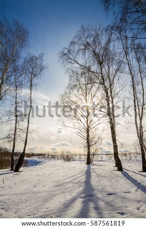Sunny winter forest #587561819