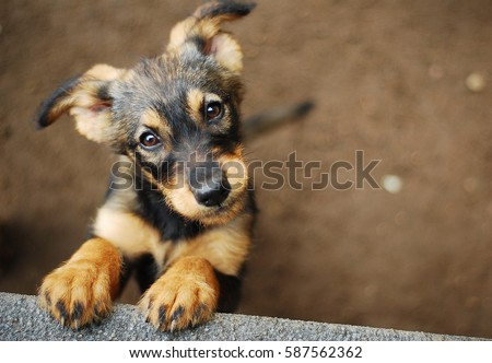 dog Royalty-Free Stock Photo #587562362
